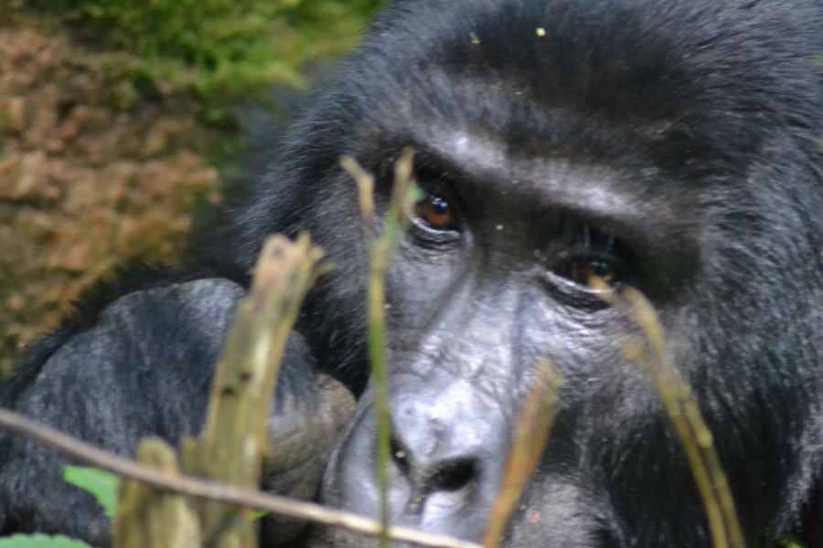 14 days Luxury Uganda safari