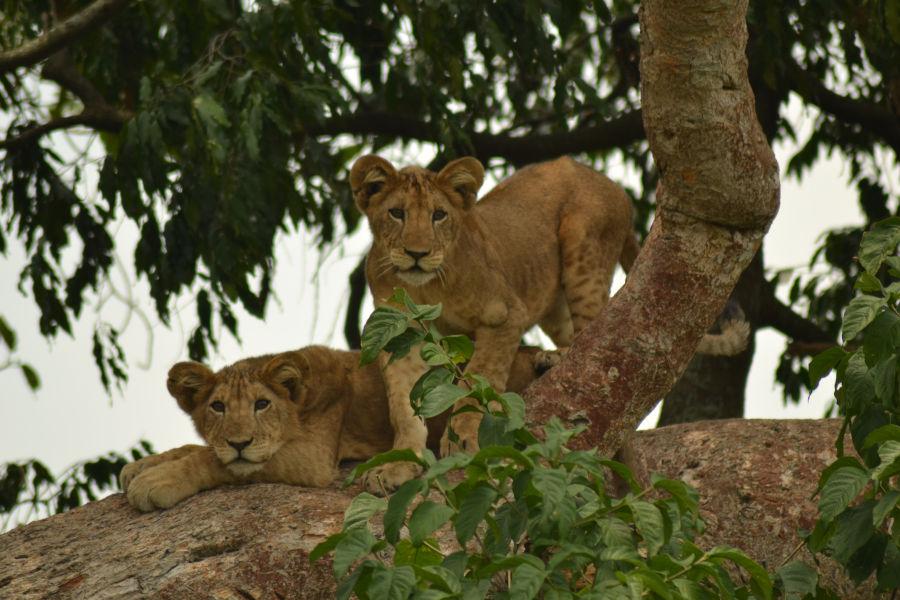 6 days Luxury Uganda safari