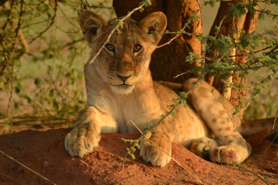 Luxury Uganda Safaris by car