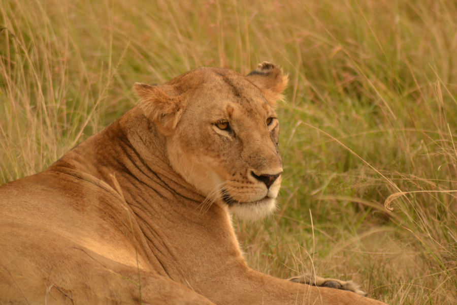 Luxury East Africa Safaris